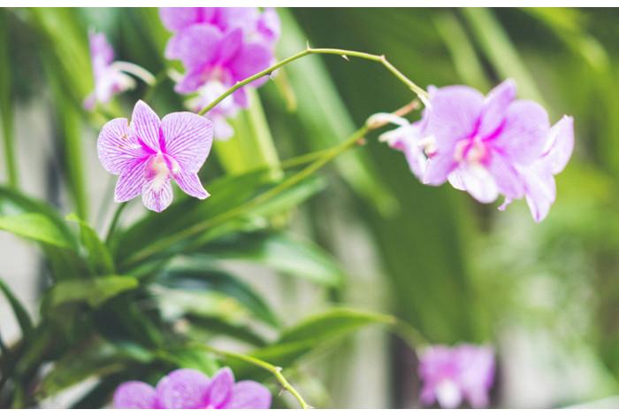 Модульная картина Розовая орхидея в зелени
