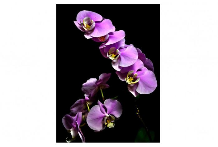 Картина Лавандовая орхидея