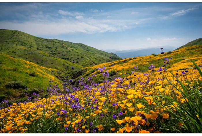Цветы на склоне горы