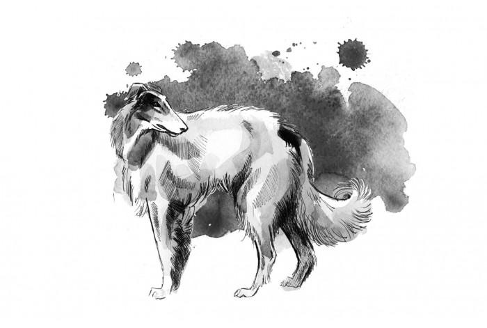 Картина Борзая акварелью